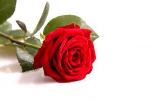 Schenk een roos en steun ons in de strijd tegen Duchenne